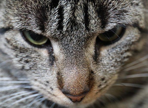 huisdieren dieren video videografie fotografie - RSDesigns